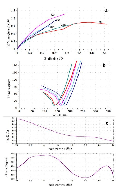Investigation of Passive Film Properties and Pitting Resistance of